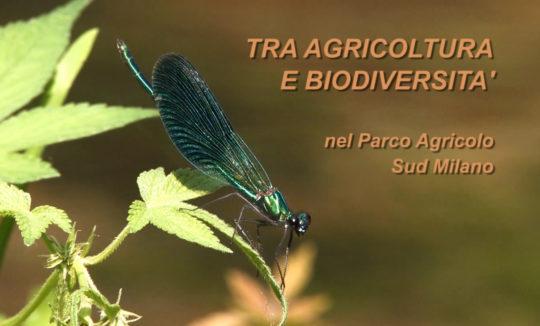 tra agricoltura e biodiversità nel parco agricolo sud milano