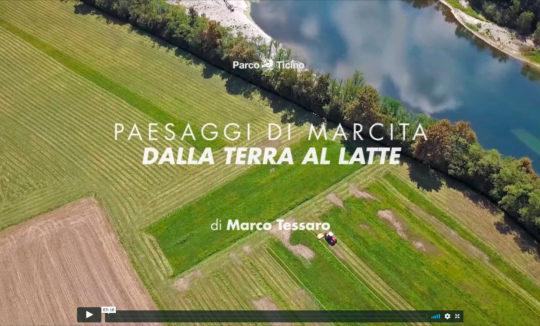 Parco del Ticino - marcite