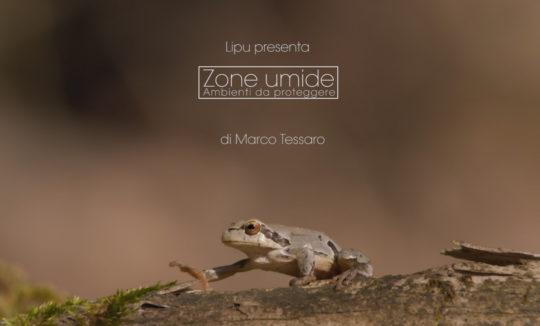 zone umide, raganella