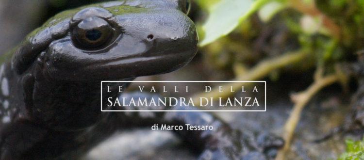 Le valli della Salamandra di Lanza