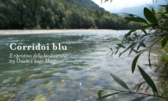 Corridoi blu - Il ripristino della biodiversità tra Ossola e Lago Maggiore